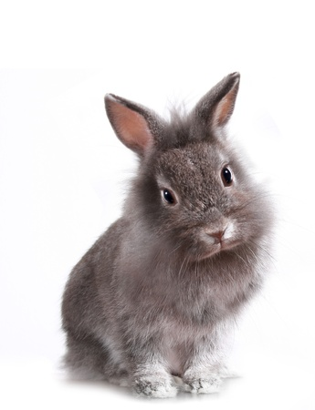 Adorable Little Bunny Rabbit
