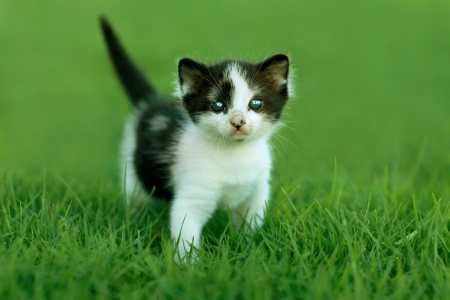 Cute Little Kitten Outdoors in Natural Light Stock Photo - 15162371