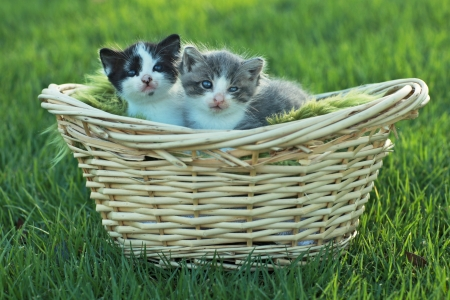 Cute Little Kittens Outdoors in Natural Light Stock Photo - 15162570