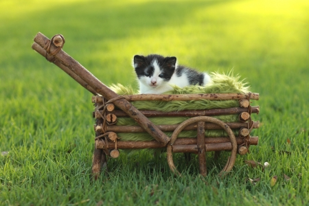 Adorable Baby Kitten Outdoors in Grass Stock Photo - 15162394