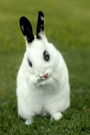 Adorable White Bunny Rabbit Outdoors in Grass Stock Photo - 15162678