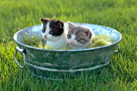 Cute Little Kittens Outdoors in Natural Light Stock Photo - 15162583