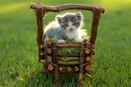 Adorable Baby Kitten Outdoors in Grass Stock Photo - 15162679