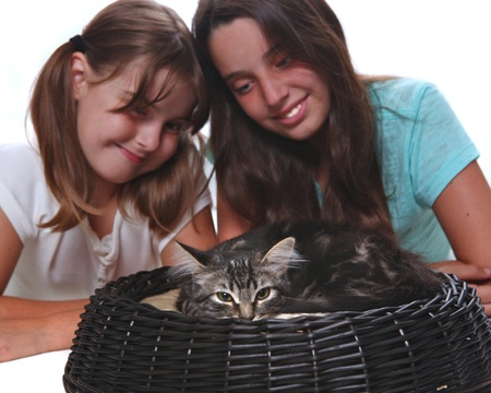 Sisters Holding Their Young Kitten on White Stock Photo - 15154282