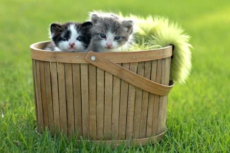 Cute Little Kittens extérieur à la lumière naturelle Banque d'images - 15162545