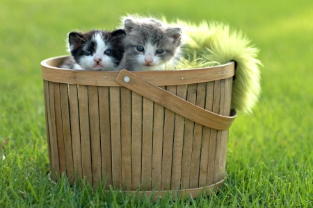 lovable: Cute Little Kittens Outdoors in Natural Light