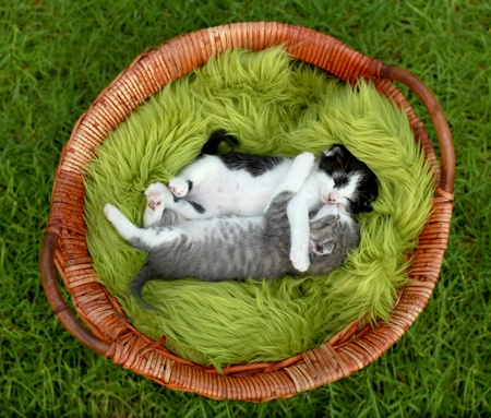 Cute Little Kittens Outdoors in Natural Light Stock Photo - 15162537