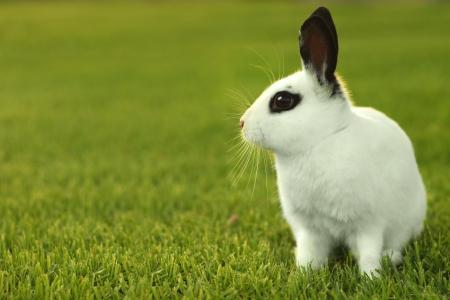 lapin: Adorable lapin blanc en ext�rieur dans l'herbe