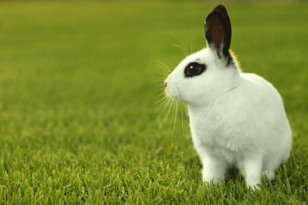 Adorable White Bunny Rabbit Outdoors in Grass photo
