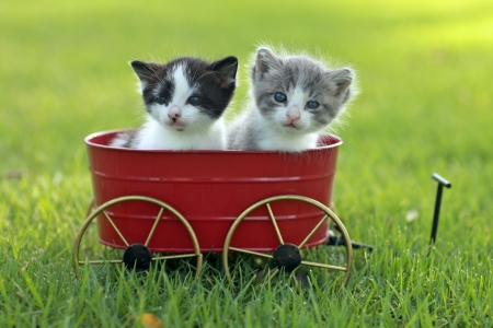 Cute Little Kittens Outdoors in Natural Light
