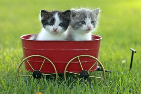 Cute Little Kittens Outdoors in Natural Light Stock Photo - 16066138