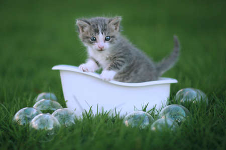 Adorable Newborn Kitten Portrait Outdoors in Green Meadow Stock Photo - 16066174