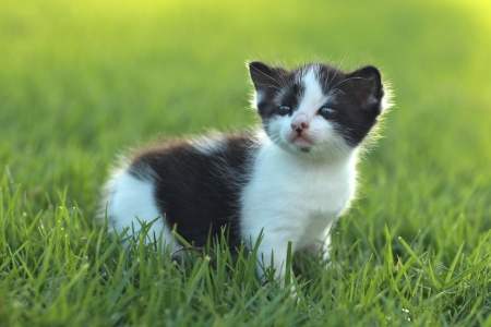 Adorable Baby Kitten Outdoors in Grass Stock Photo - 16066135