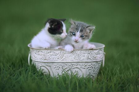 Baby Kittens Outdoors in a Green Meadow of Grass Stock Photo - 16066139
