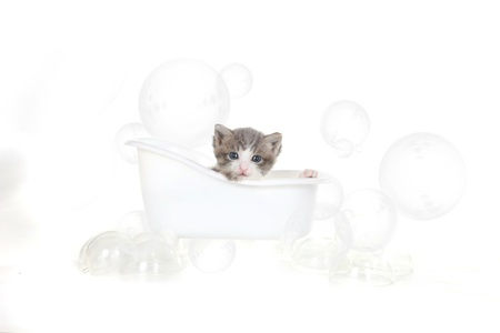 Cute Kitten Portrait in Studio Taking a Bath Stock Photo - 16066050