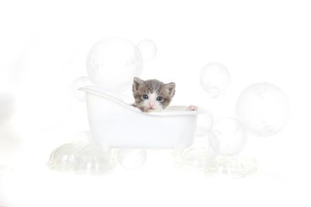 Cute Kitten Portrait in Studio Taking a Bath Stock Photo - 16066050