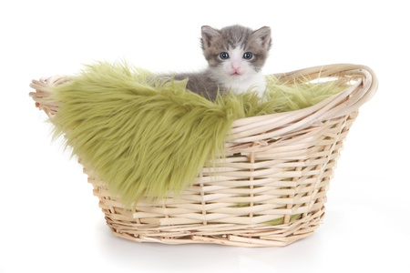 Cute Little Kitten Portrait in Studio on White Background Stock Photo - 16066074