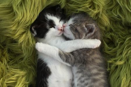 Cute Little Kittens Buiten in Natural Light