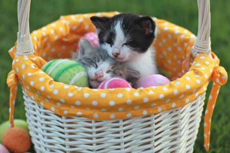 Kittens in a Holiday Easter Basket With Eggs Foto de archivo