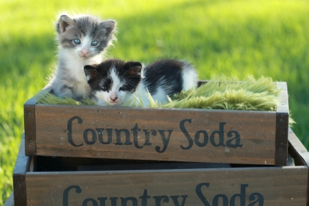 Cute Little Kittens Outdoors in Natural Light Stock Photo - 16066071
