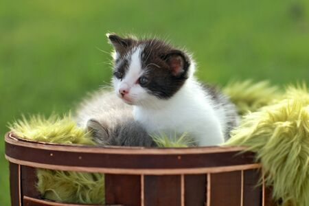 Adorable Baby Kitten Outdoors in Grass Stock Photo - 16066129
