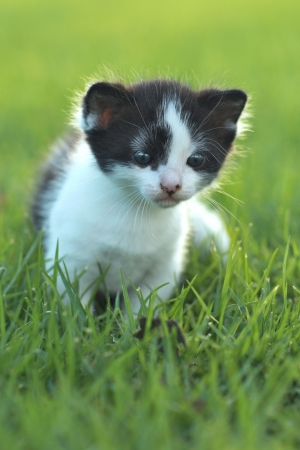 Adorable Baby Kitten Outdoors in Grass photo