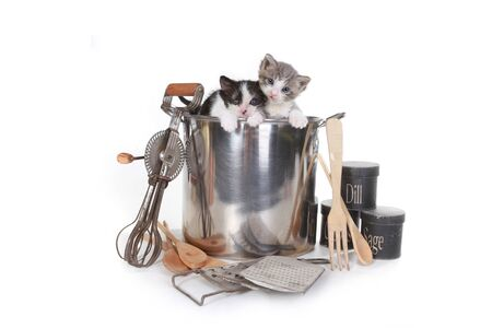 Cute Kittens Looking at the Camera Stock Photo - 16833185