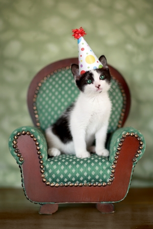 Cute Kitten in a Chair With Birthday Party Hat Stock Photo - 17499604