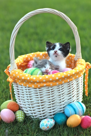 Kittens in a Holiday Easter Basket With Eggs Stock Photo - 18365662