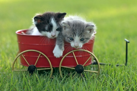Cute Little Kittens Outdoors in Natural Light Stock Photo - 18365664