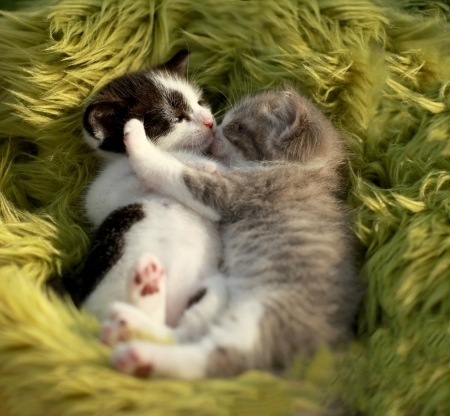 Hugging Little Kittens Outdoors in Natural Light Stock Photo - 18365655