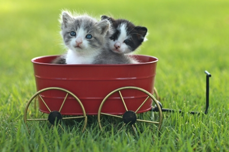 Cute Little Kittens Outdoors in Natural Light Stock Photo - 18365665