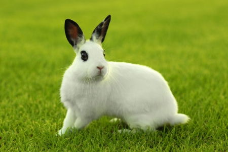 Adorable White Bunny Rabbit Outdoors in Grass Stock Photo - 18365658