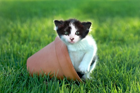 Cute Little Kitten Outdoors in Natural Light Stock Photo - 18365659