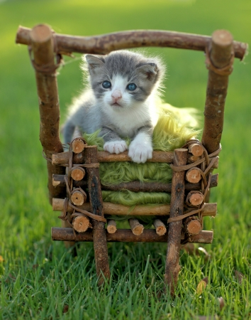 Adorable Baby Kitten Outdoors in Grass Stok Fotoğraf