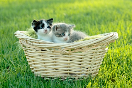 Cute Little Kittens Outdoors in Natural Light Stock Photo - 18365661
