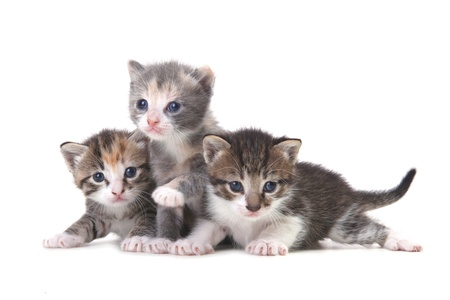 Three Adorable Baby Kittens on a White Background Stock Photo - 19485724