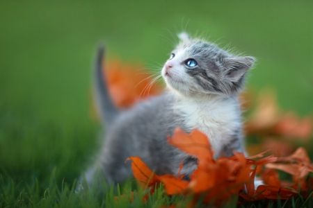 Cute Baby Kittens Playing Outdoors in the Grass Stock Photo - 19485720