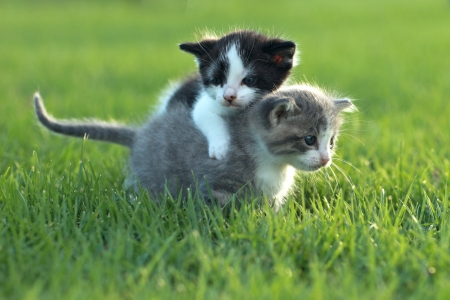 Cute Little Kittens Outdoors in Natural Light Stock Photo - 19485763