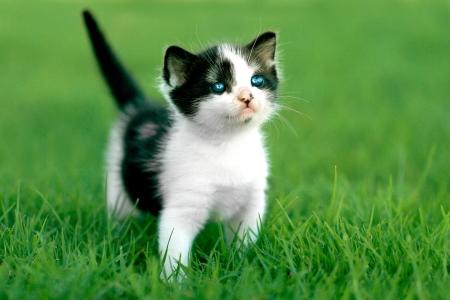 Cute Little Kitten Outdoors in Natural Light Stock Photo - 19485717