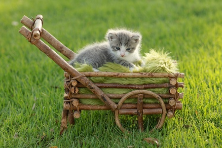 Adorable Baby Kitten Outdoors in Grass Stock Photo - 19485768