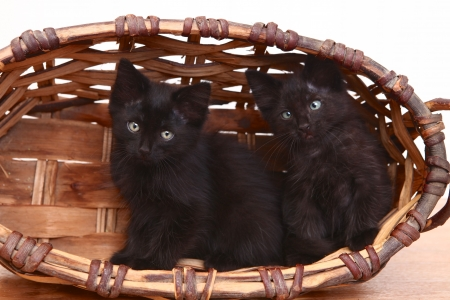 Adorable Kittens Inside a Basket on White Stock Photo - 20332009