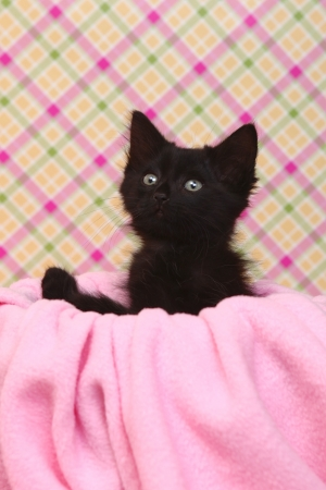 Sweet Kitten on a Pink Soft Background photo