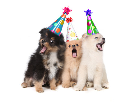 Humorous Puppies Singing the Happy Birthday Song Wearing Silly Hats Foto de archivo