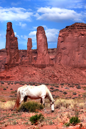 Horse Grazing in a Beautiful Monument Valley Landscape  photo