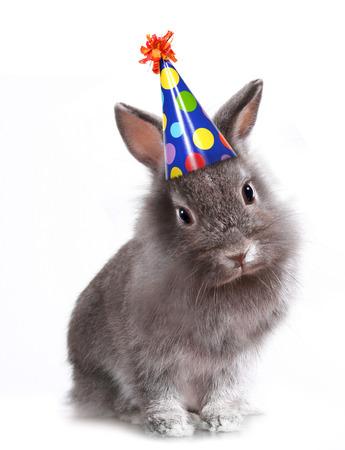 토끼의 재미 있은 이미지 생일 모자를 쓰고 토끼