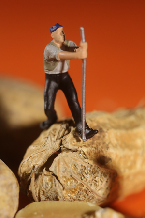 bizarre: Miniature Fake People Working on Peanuts Stock Photo