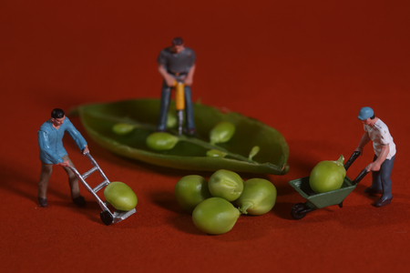 comedic: Miniature Construction Workers in Conceptual Food Imagery With Snap Peas