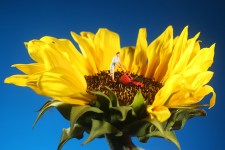 Miniature Plastic Person Mowing Grass on a Sunflower