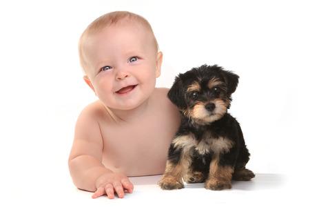 그의 애완 동물 찻잔으로 귀여운 아기 소년 Yorkie Puppy